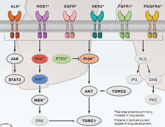 肺腺癌的发生发展(3):早期肺腺癌的分子学发病机理..