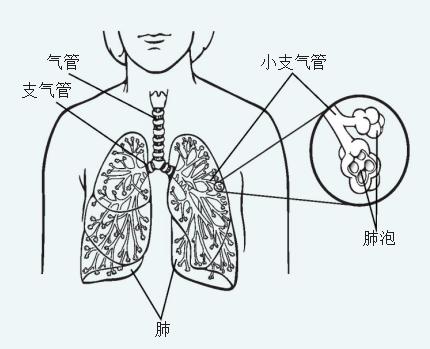 认识肺癌—非小细胞肺癌