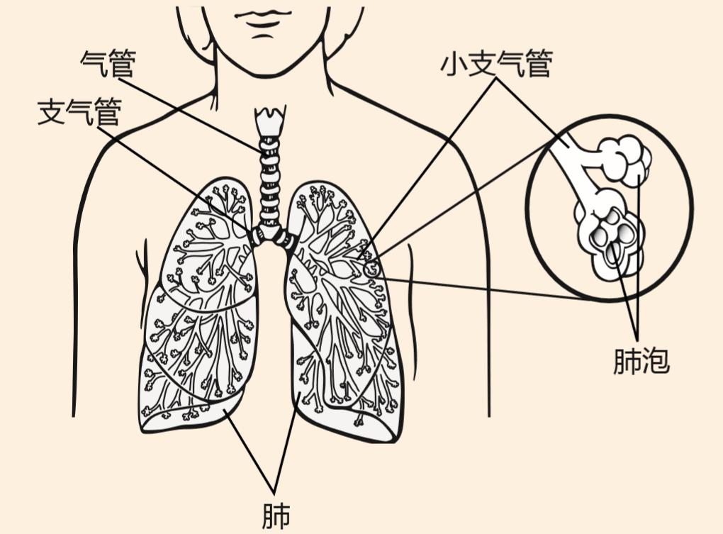 认识肺癌—小细胞肺癌
