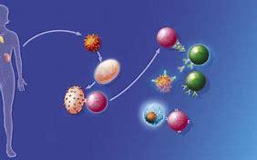 免疫相关不良反应(irAE)