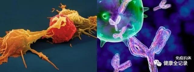 食物里的营养成分和免疫有关系吗?