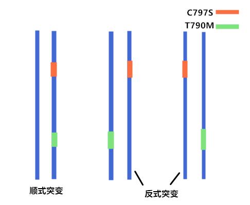 什么是T790M/C797S的顺式和反式突变?